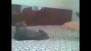 Leydi kedi tormozuu