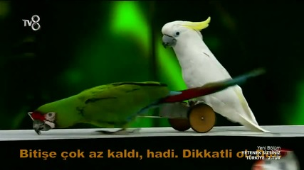 Чудесно представление с папагали