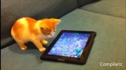 Животинки играещи на ipads - Компилация