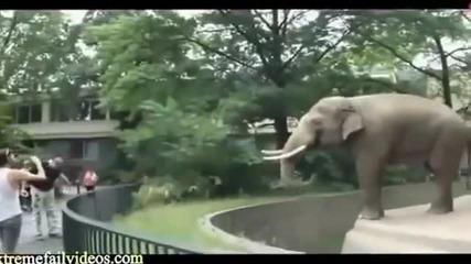 Смешни и забавни моменти с животни,които нападат хората