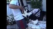 Котка си играе с акордеон