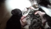 Новородено/и коте / котета само на 2 дни