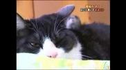 Невероятно Но Факт - Любов Между Котка И Мишка!!!