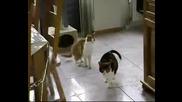 Много Закачлива Котка
