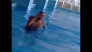деската в басейна.mp4