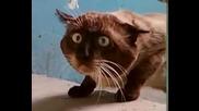 Голям смях - Котка тотално притеснена !
