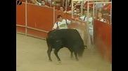 хора прескачат бикове с различни номера
