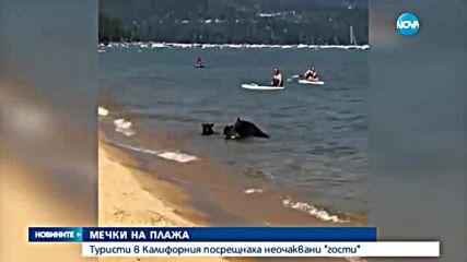 Семейство мечки се появи на плаж, пълен с хора