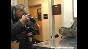 огромна котка