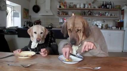 Две кучета вечерят