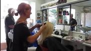 Коафьорка подстригва със стил , сигурно и нинджите биха и завидели !