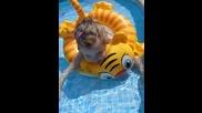 Плувам-плувам... rotate