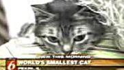 Най - Малката Котка На Света