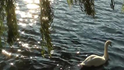 По вода... - caribiana