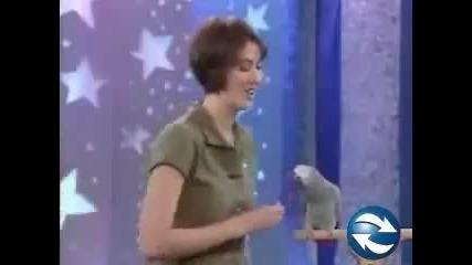 Смешно папагалче