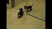 Сладко кученце и огледало