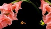 Лятна красота - гладиоли ... (music by Bandari)