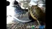 загоряла костенурка и обувка