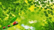 Мокри зелени листа! ... ( David Lanz music) ... ...