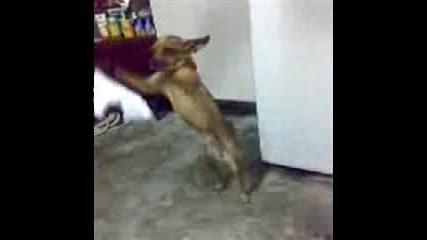 Куче Играе Хоро