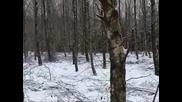 Лов На Дива Свиня - 1