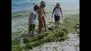 Човекът водорасло плаши децата на плажа Няма по голям идеот от него