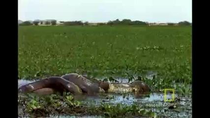 Anaconda Hunts