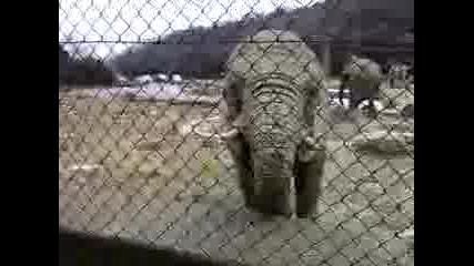 Слон Се Оригва