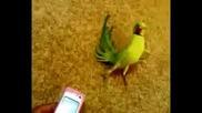 Папагал кърти мивки!!!