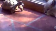 Костенурка хапе котка
