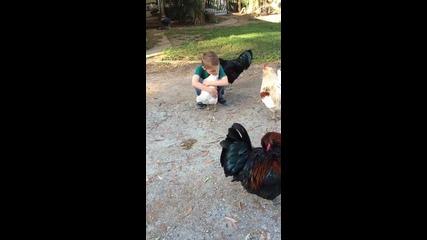 Всяко животно има сърце, а тази кокошка го доказва