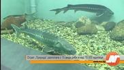 Екомузей с 8,5-тонен аквариум в Русе