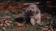 (16+) Последната Къща Отляво (1972) Целият филм - част 3/4 / Бг Субс