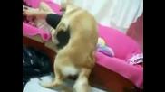 Турско куче желае секс! :d