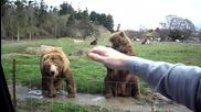 Мечки приветстват хората в зоопарк