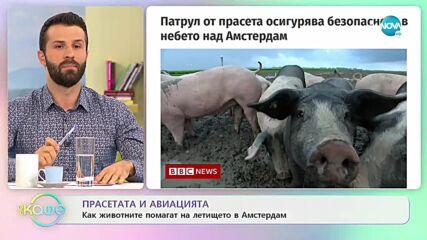 """Храним кучето си грешно - грози ни затвор - """"На кафе"""" (19.10.2021)"""