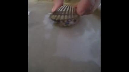 Октопод се крие в черупка на мида и разкрива своите умения на нинджа!
