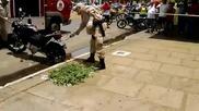 Скъсан чувал и пъргава змия направи ловците за смях на улицата