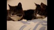 Кой каза,че котките не Говорят  (яКооО лаФ,а после зДраво близанеЕ)