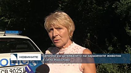 Започна умъртвяването на заразените животните в село Николово