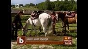 30 живо изгорени коня - Конят - моят приятел