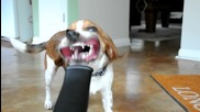 Смешно куче играе с тръба,от която излиза струя въздух