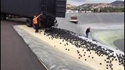 Стотици хиляди черни топки пазят питейната вода на Лос Анджелис !