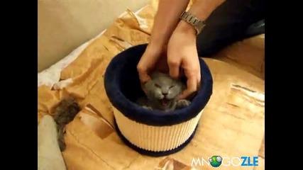 Коте мрази да му духат ( Смях )
