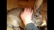 домашни зайци 1
