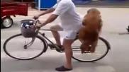 Това куче взриви Ютуб!