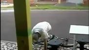 Пияница прави жалки опити да кара колело