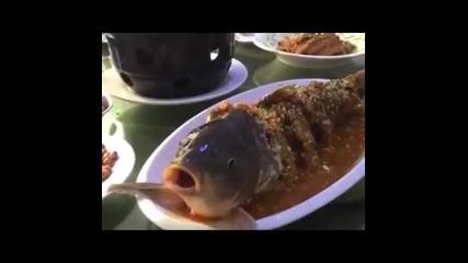 Риба пие алкохол
