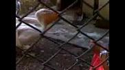 Гладни Птички