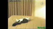 (смях) Котка Се Разцепва В Стената :d
